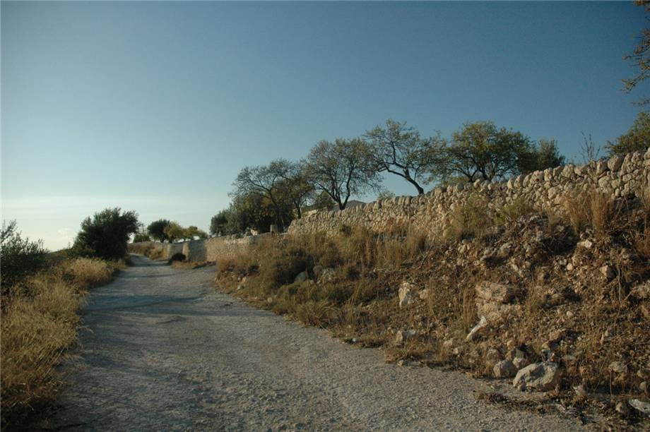 For sale Land Noto  #230T n.9