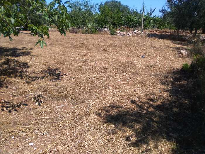 For sale Land Valenzano CIMITERO #16 n.1