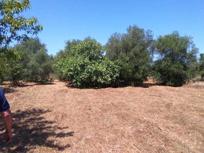 For sale Land Valenzano CIMITERO #16 n.3