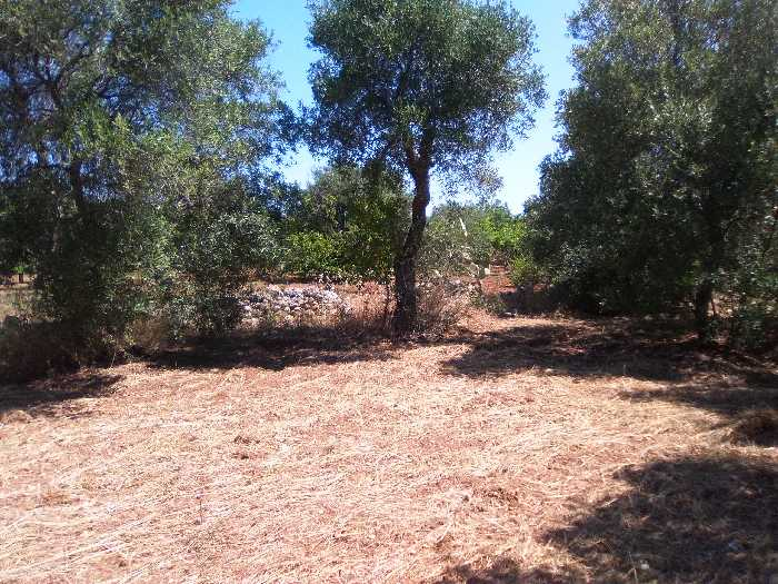 For sale Land Valenzano CIMITERO #16 n.4