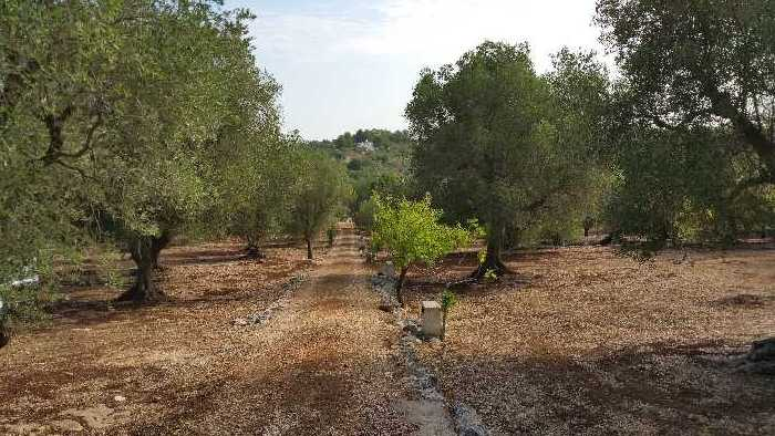 For sale Commercial property Ostuni  #<br5 n.2