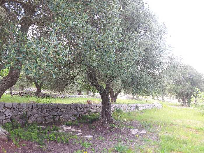 For sale Commercial property Ostuni  #<br5 n.3