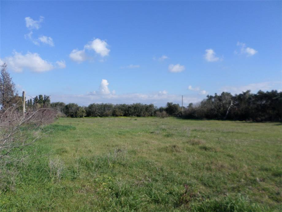 For sale Land Assemini  #2019TerreArtig n.2