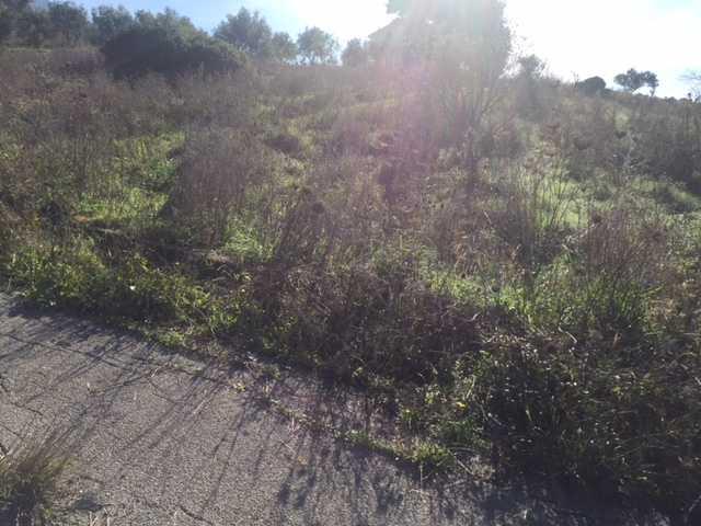 For sale Land Casteldaccia Cast.Traversa-Vallecorvo #CA282 n.7
