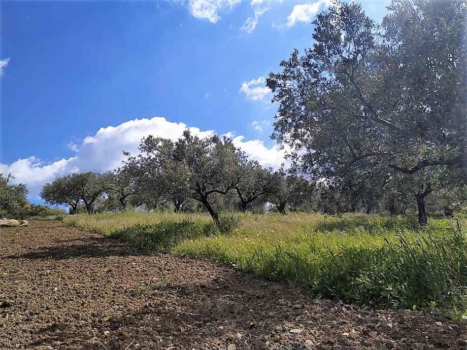 For sale Land Casteldaccia Cast.Traversa-Vallecorvo #CA422 n.6