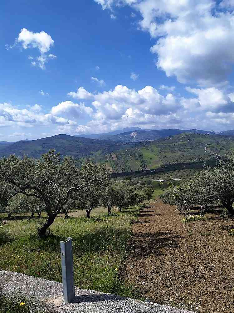 For sale Land Casteldaccia Cast.Traversa-Vallecorvo #CA422 n.8