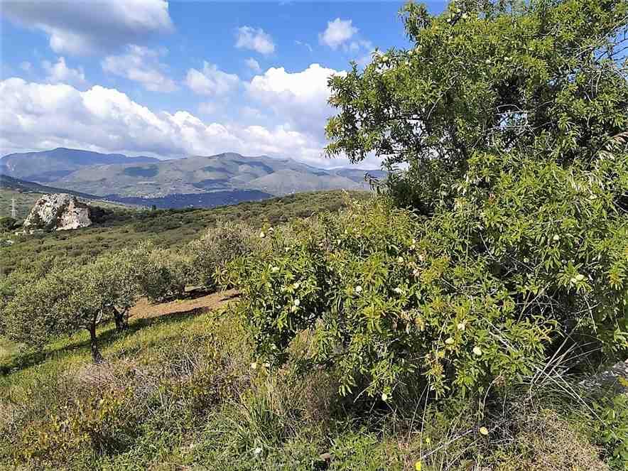 For sale Land Casteldaccia Cast.Traversa-Vallecorvo #CA422 n.10