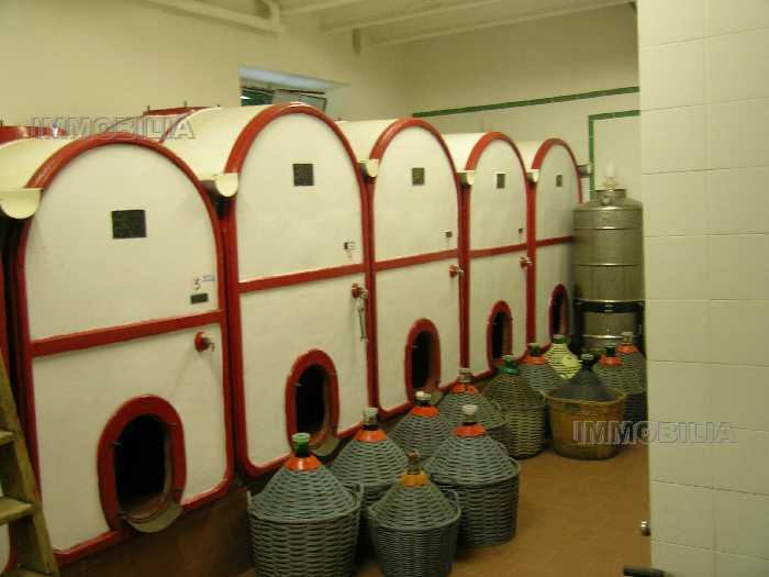 Vendita Azienda Agricola Laterina Pergine Valdarno PERGINE VALDARNO #275 n.8