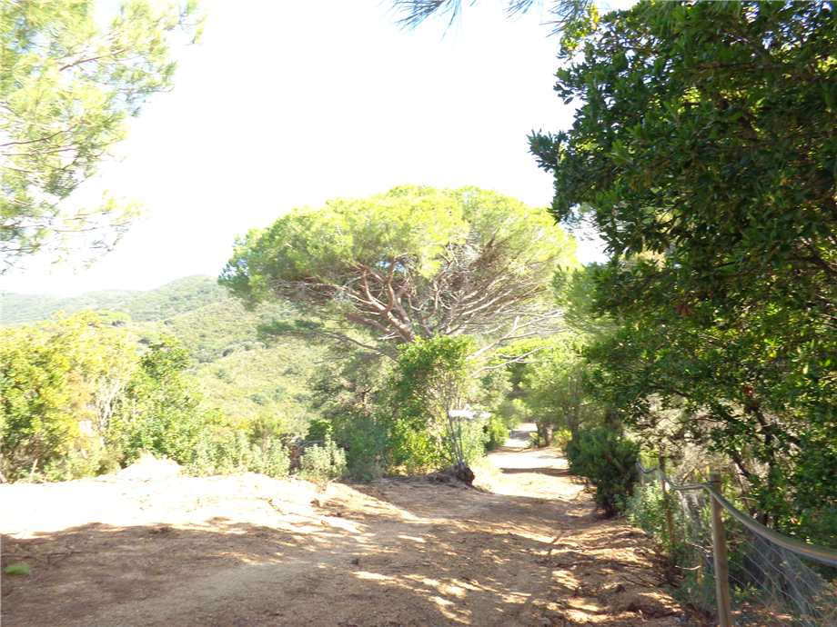 Vendita Azienda Agricola Campo nell'Elba Campo Elba altre zone #4424 n.6
