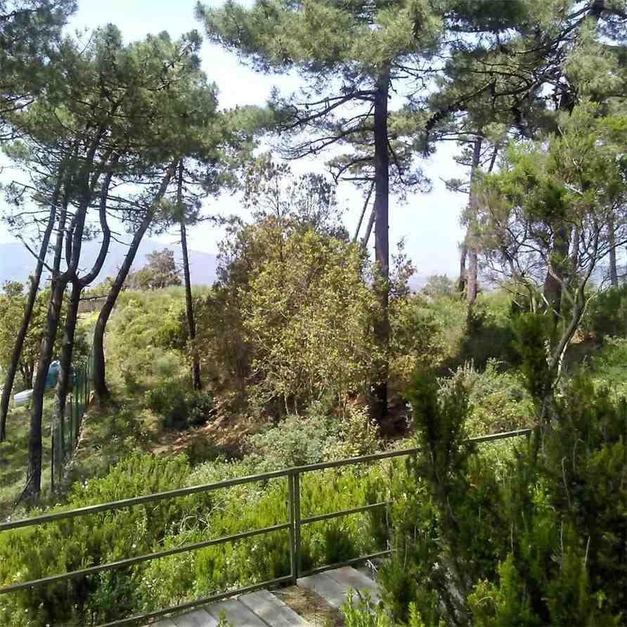 For sale Land Capoliveri Capoliveri altre zone #4637 n.8