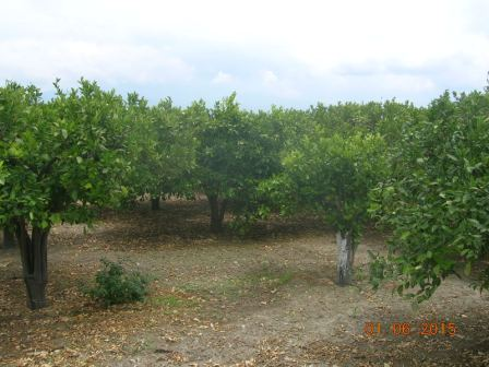 For sale Land Centuripe  #1674/a n.6