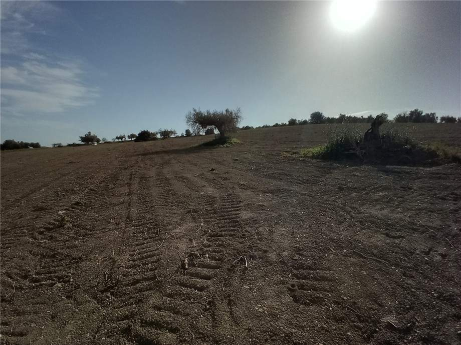 For sale Land Noto  #110T n.15