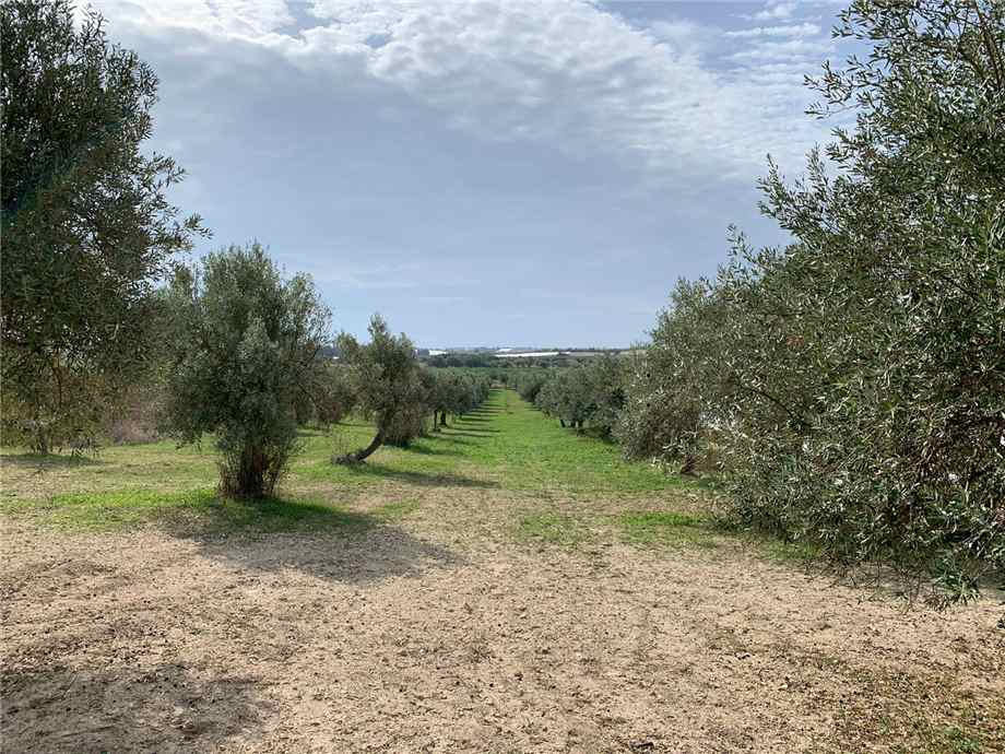 For sale Land Noto  #16T n.9