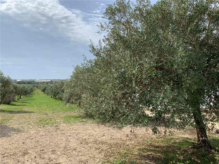 For sale Land Noto  #16T n.10