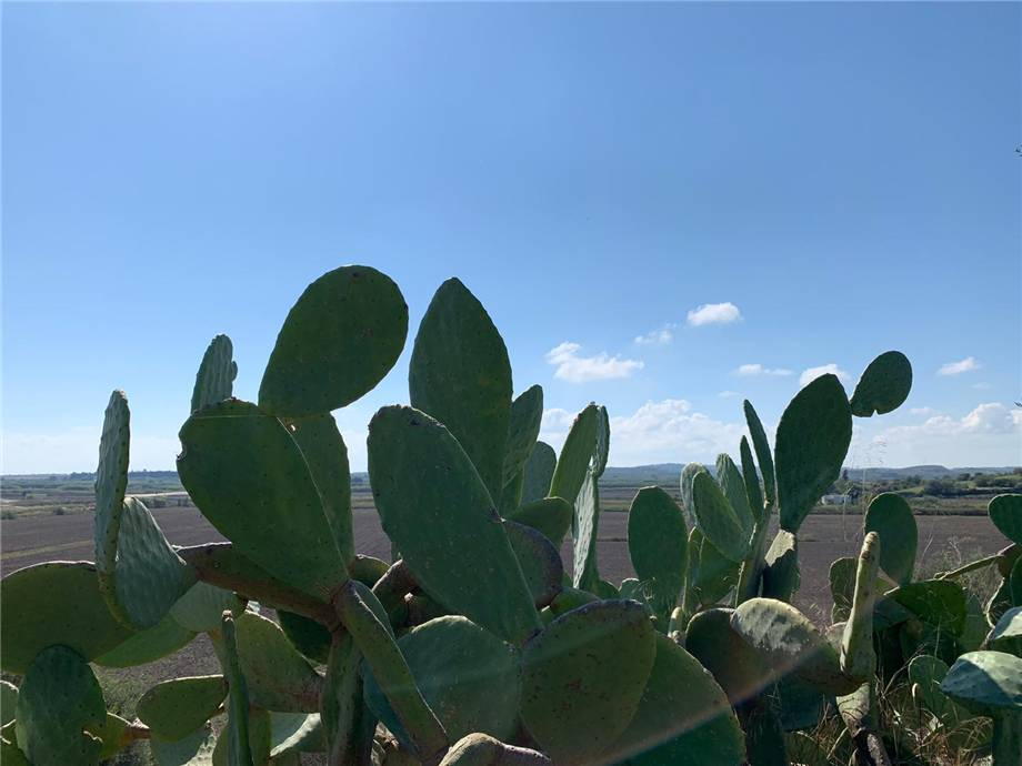 For sale Land Noto  #18T n.14