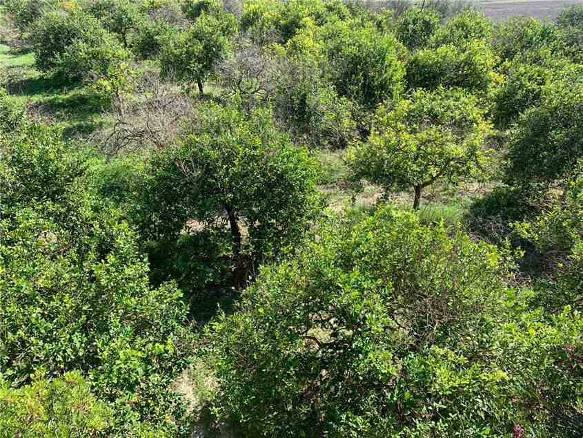For sale Land Noto  #18T n.15