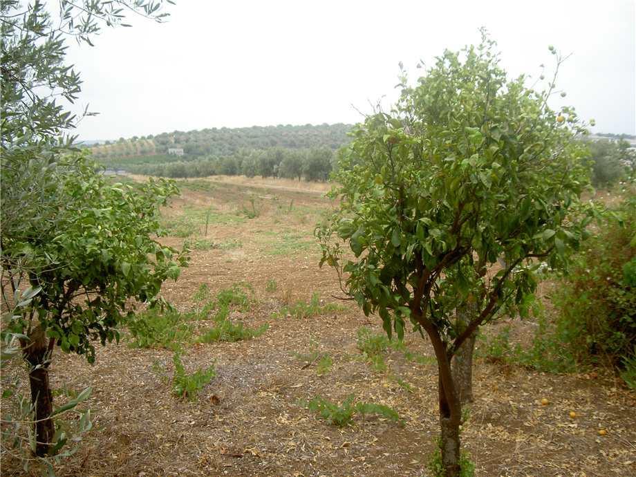For sale Land Pachino  #68T n.6