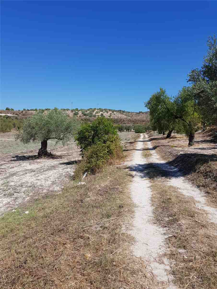 For sale Land Noto  #67T n.10
