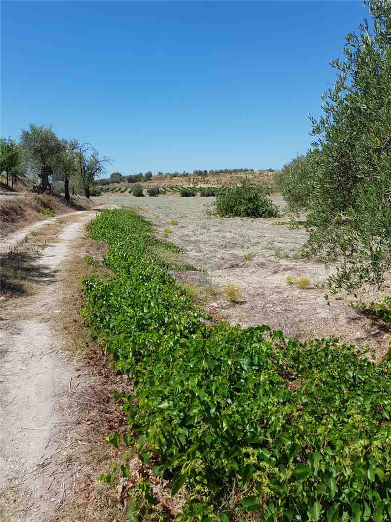 For sale Land Noto  #67T n.11