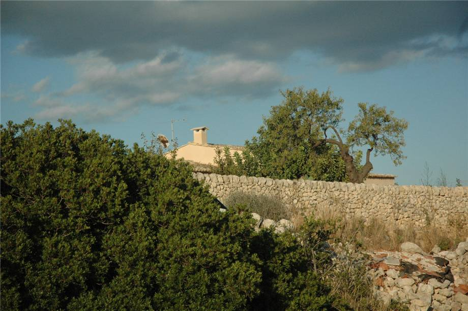 For sale Land Noto  #230T n.19